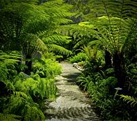 How to design your garden | Brisbane City Council