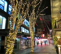 Street Tree Lights Brisbane City Council