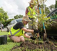 Correct planting techniques   Brisbane City Council
