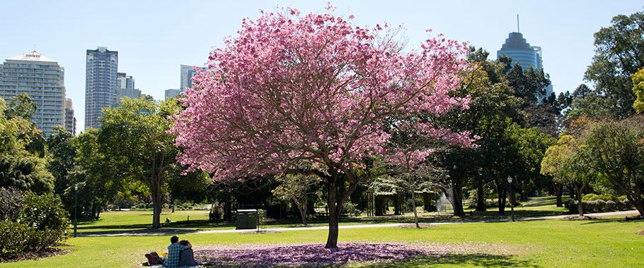 City Botanic Gardens Master Plan | Brisbane City Council