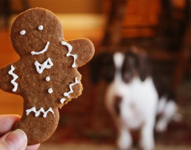 School holiday activity: Christmas gingerbread treats