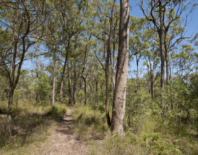 Guided walk at Nudgee Beach Reserve