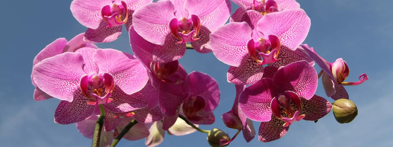John Oxley District Orchid Society Inc.