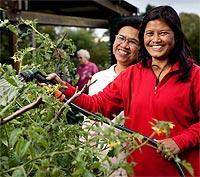Cultivating Community Gardens Grants Brisbane City Council