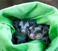 Native Wildlife Carers Grant